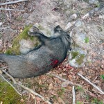 en svart brungris