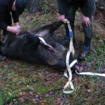 En av de tre grisar som sköts på söndagen