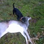 En dovhind för Etta och Stella