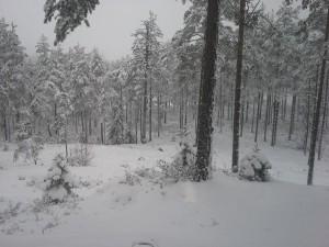 Fint med snö