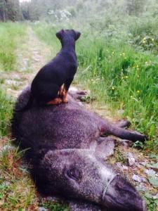 Lugn i griskontakten i alla fall