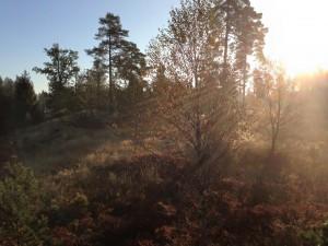 Vacker höstmorgon
